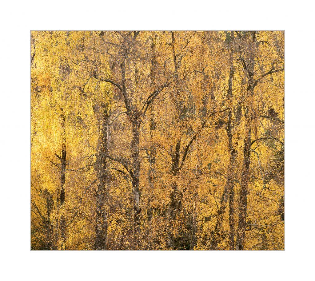Autumn rhythm limited edition print